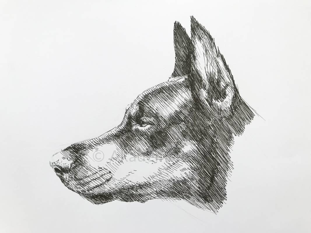 tierportraits zeichnen lernen  akademie ruhr
