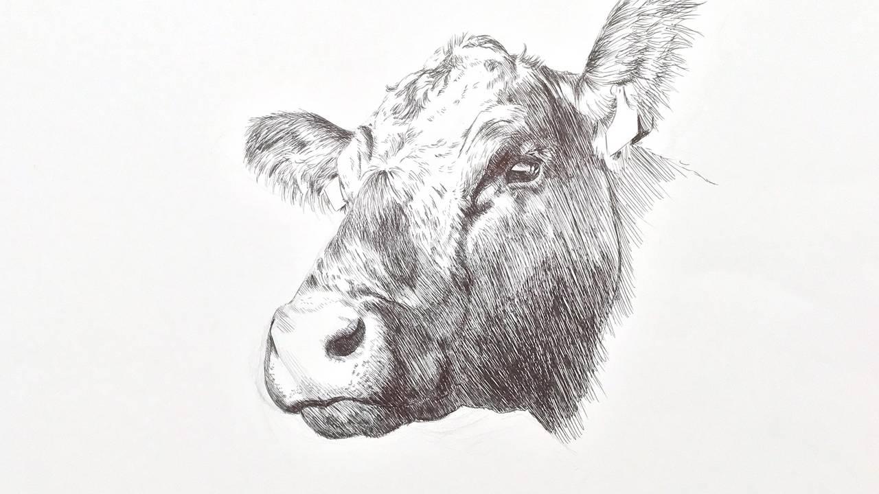Zeichenkurs Tiere Malen Und Zeichnen Akademie Ruhr