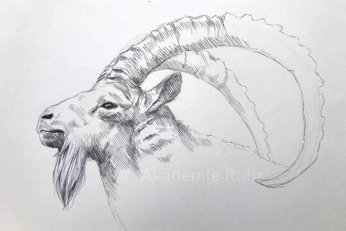 Tiere Malen Und Zeichne Lernen Akademie Ruhr